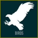 Birds-btn