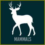 Mammals-btn